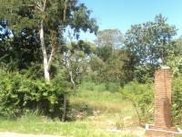 fazenda (11)